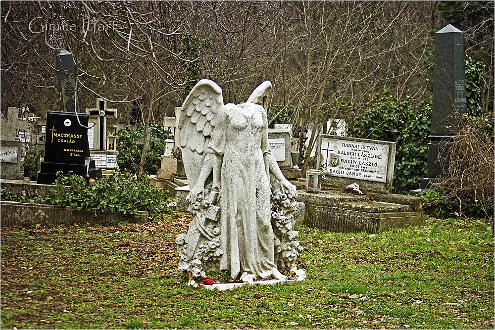 photoblog image Political Suicide